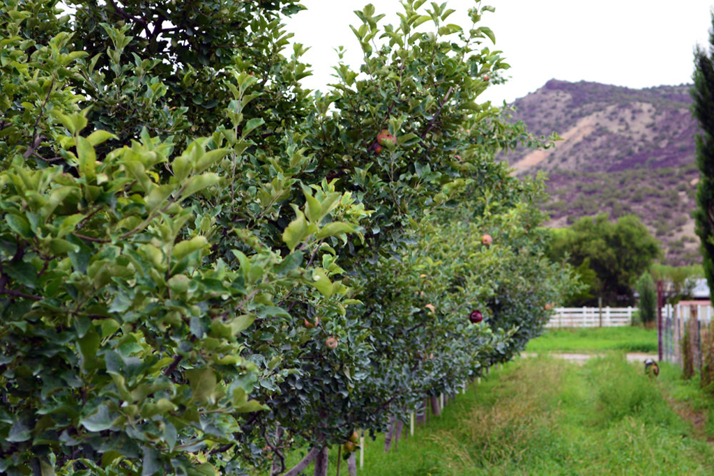 Fruit trees (Photo Credit: U.S. Department of Agriculture)