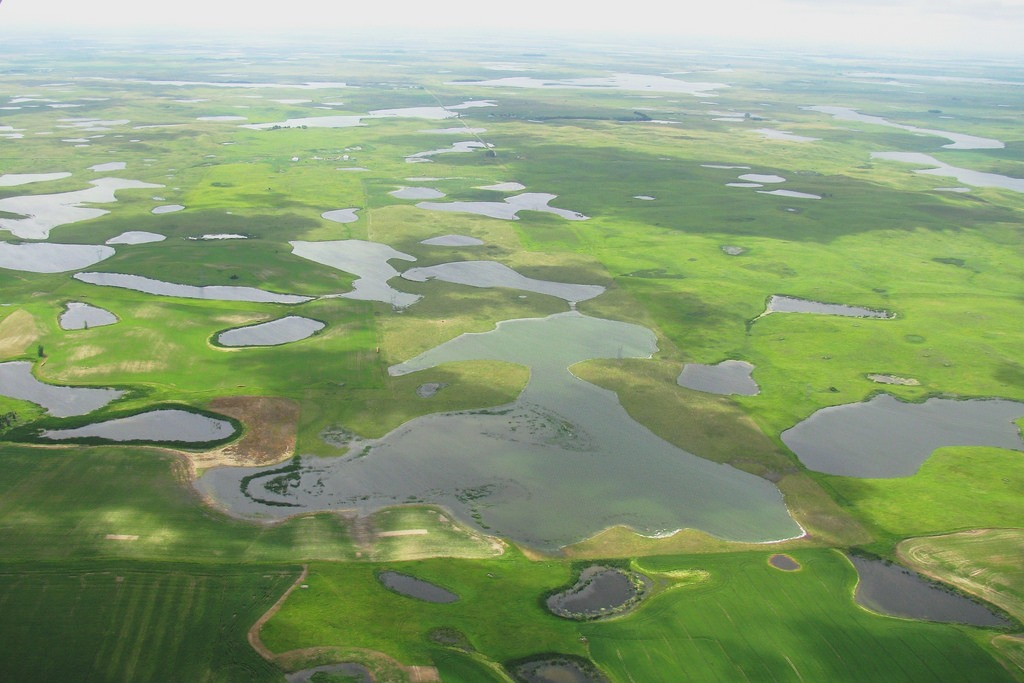 Wetlands and their plants (Photo Credit: U.S. Fish and Wildlife Service)